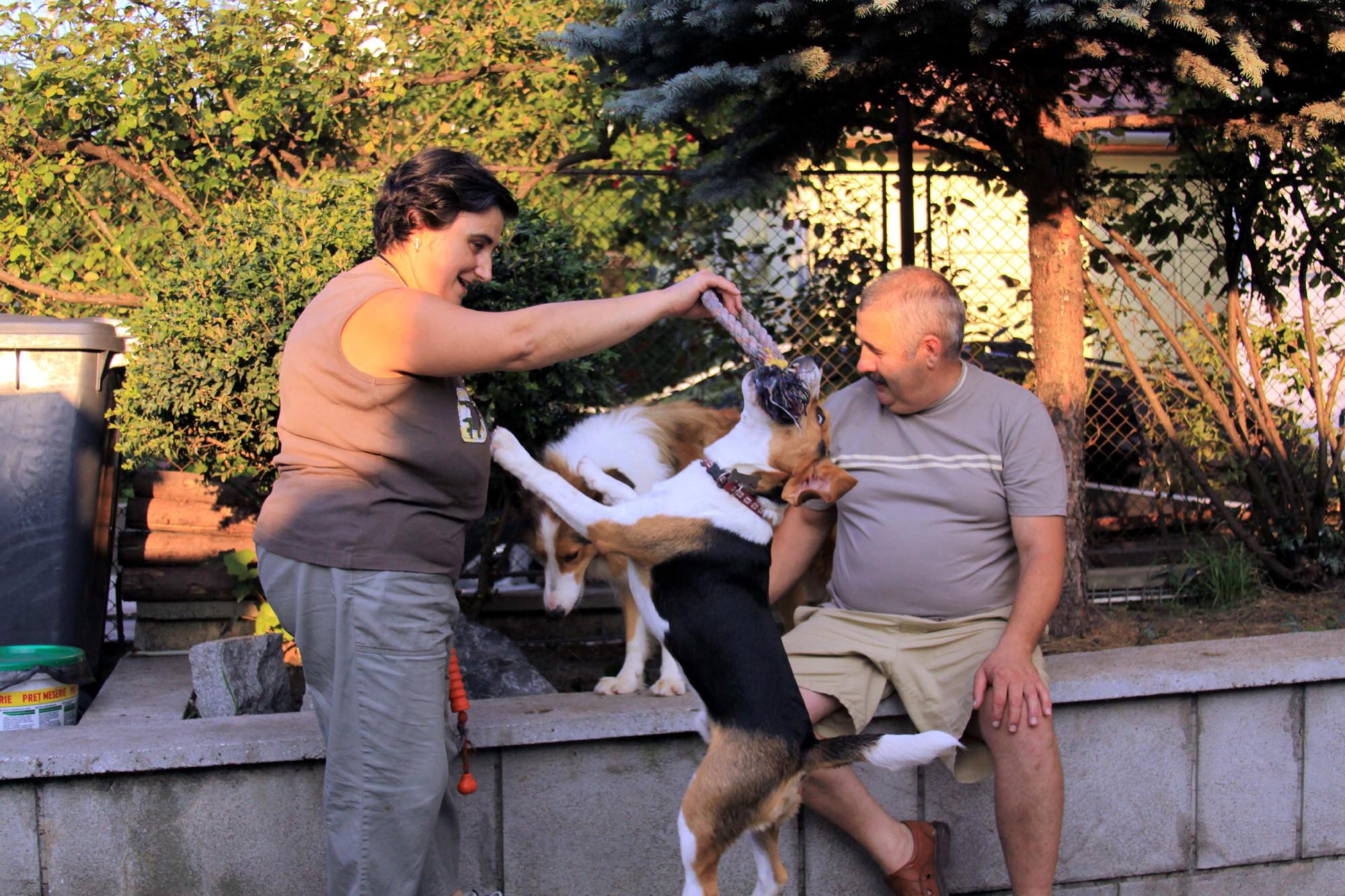 Pet Hotel - gazduire animale